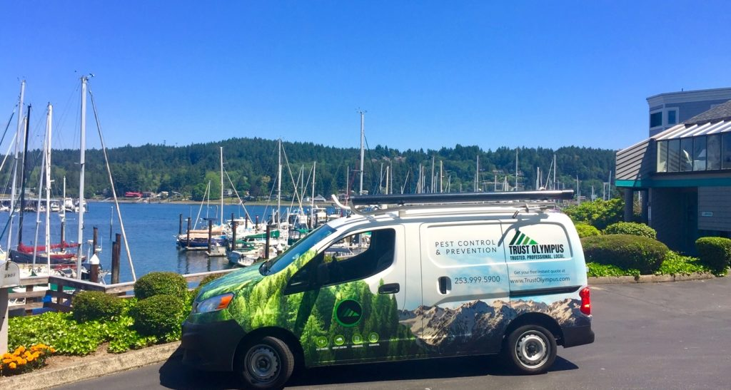 Local Gig Harbor Pest control